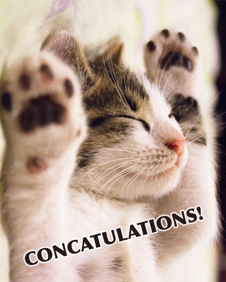 congratulations card concatulations pun cats