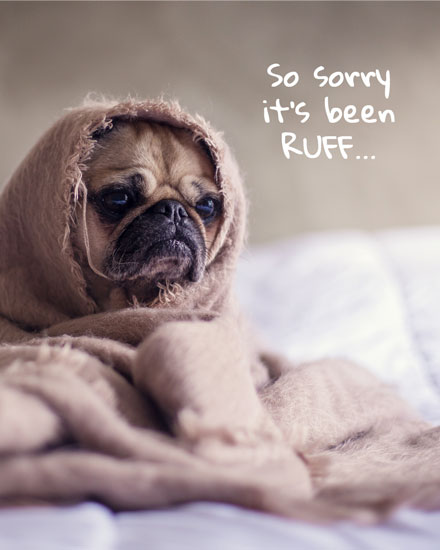 get well soon pug sorry been ruff