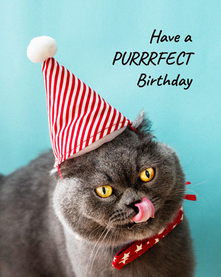 happy birthday card cat in party hat