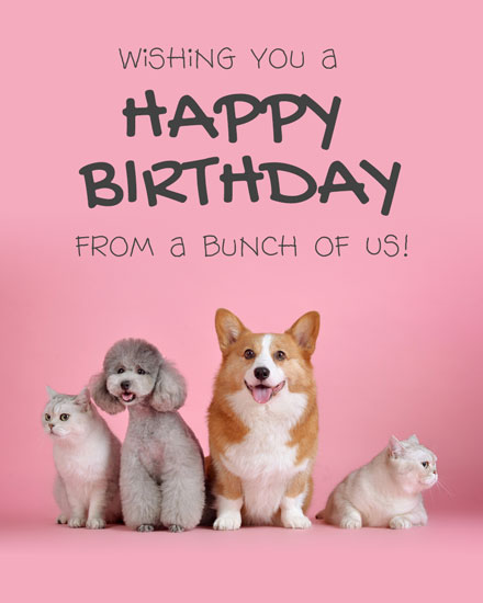 happy birthday card cuddly pets