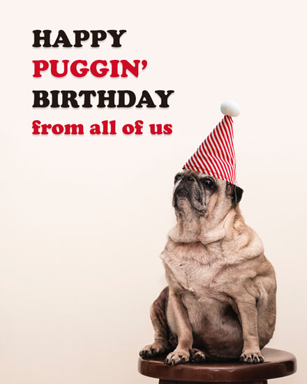 happy birthday card puggin pug dog