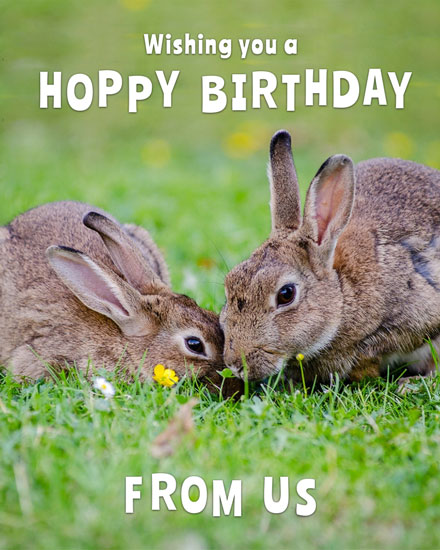 happy birthday card rabbit hoppy birthday