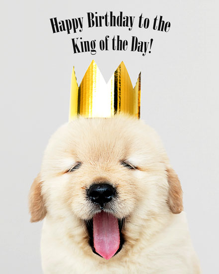 happy birthday card king pup dog