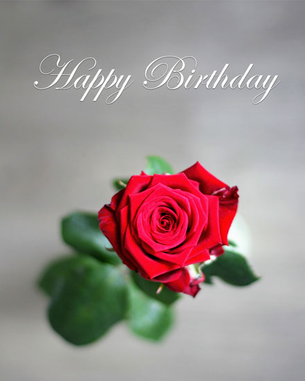 happy birthday card simple red rose