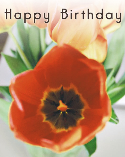 happy birthday card tulip